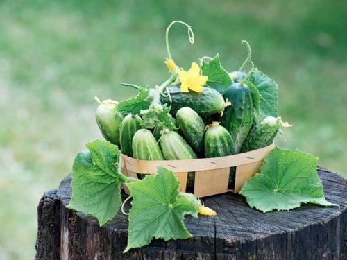 Ранний урожай закладывается осенью