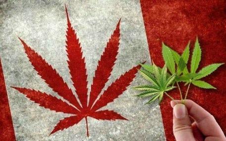 Марихуана в Канаде легализована. Что нужно знать