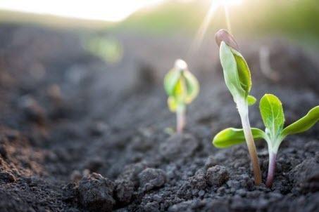 Как сделать почву рыхлой и богатой