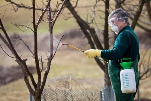 Где зимуют вредители сада и как испортить им жизнь