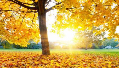 29 октября – Лонгин Сотник: приметы и суеверия