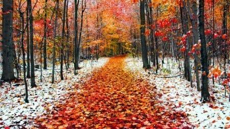 2 ноября – день Артемия: приметы и суеверия