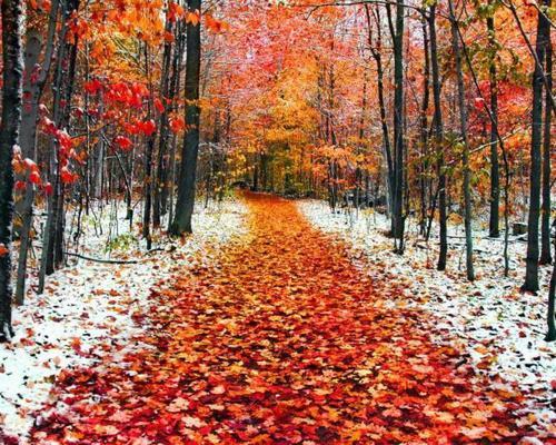 6 ноября – Афанасьев день. День иконы Божьей Матери «Всех Скорбящих Радость»: приметы и суеверия