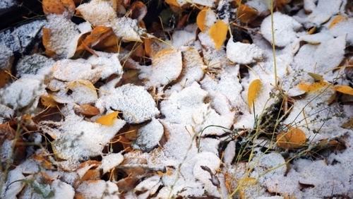 Прогноз погоды в Украине на 11 ноября