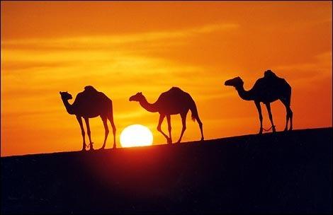 Притча о верблюдах