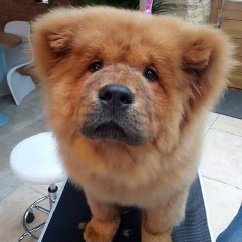 В Британии освободили щенка, арестованного за укус полицейского