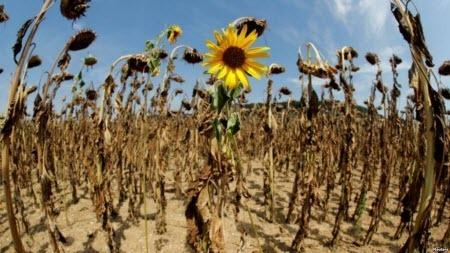 2019-й може стати найспекотнішим роком в історії