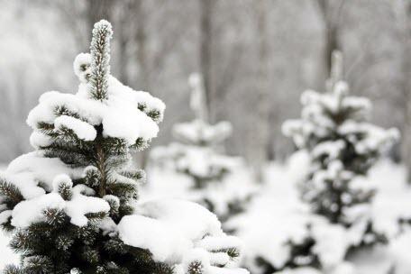 Самые распространенные мифы о зимнем укрытии растений