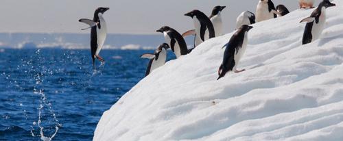 Почти 3 000 лет в Антарктиде скрывалась колония пингвинов