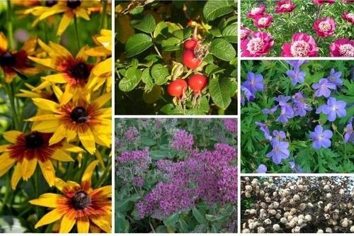 Незаменимые растения для наших садов