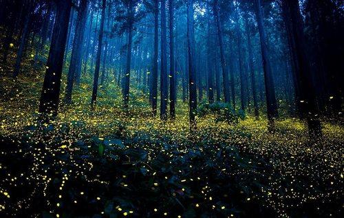 Подсказки природы: светлячки как прототипы ярких светодиодов