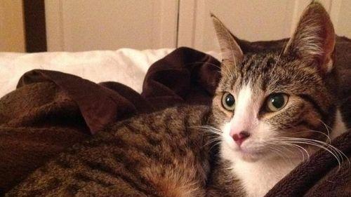 Пропавшая кошка вернулась к хозяевам спустя пять лет