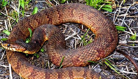 Защита сада от змей
