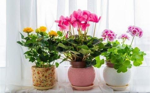 Комнатные цветы влияют на энергетику дома