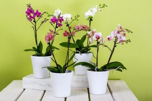 Комнатные цветы, которые нужно срочно удалить из дома: они привлекают беды и проблемы