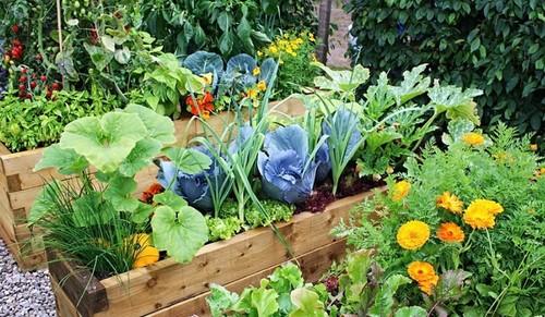 Смешанные посадки овощей и зелени