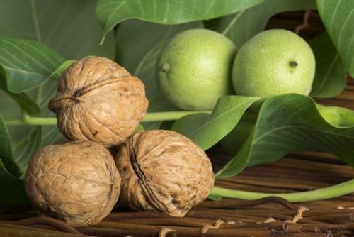 Выращивание грецкого ореха и груши