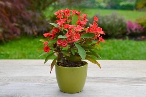 Комнатные цветы, которые защищают от неудач, негатива и сглаза