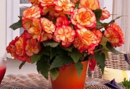 Комнатные цветы, ворующие домашнее счастье