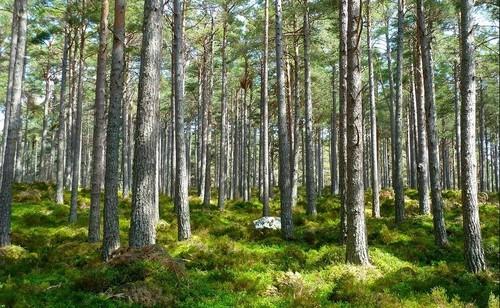 Триллион деревьев: новый план по спасению мира