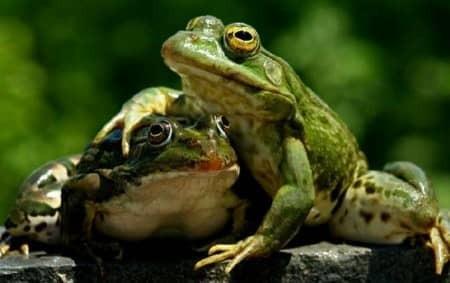 Притча «Две лягушки и кувшин»