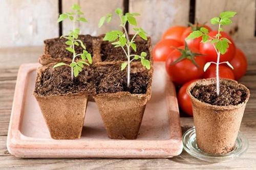 Когда сажать помидоры в 2019 году по лунному календарю: самые благоприятные даты в марте и апреле