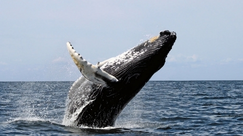 Катер столкнулся с китом