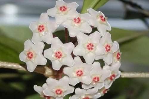 Комнатные цветы, безошибочно предсказывающие погоду