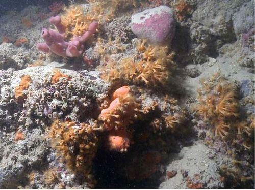 Вдоль побережья Адриатического моря обнаружили уникальный коралловый риф