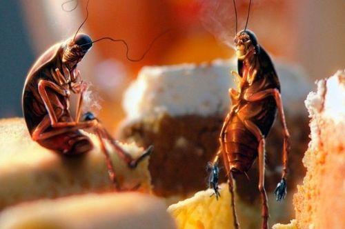Могут ли тараканы пережить человечество