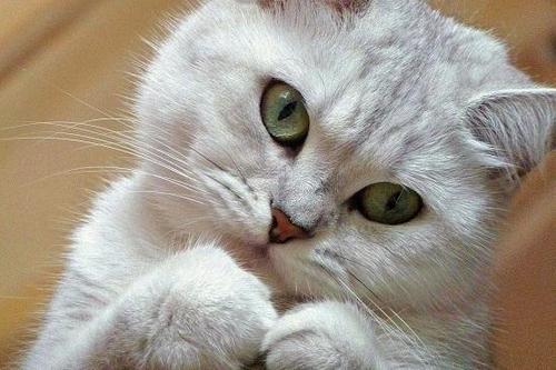 Домашняя кошка может довести хозяина до шизофрении
