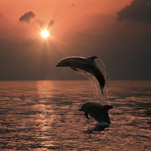 Учёные выяснили причину гибели дельфинов