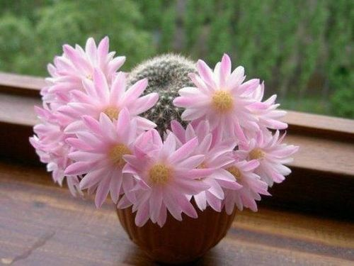 Комнатные цветы, очищающие дом от негативной энергетики