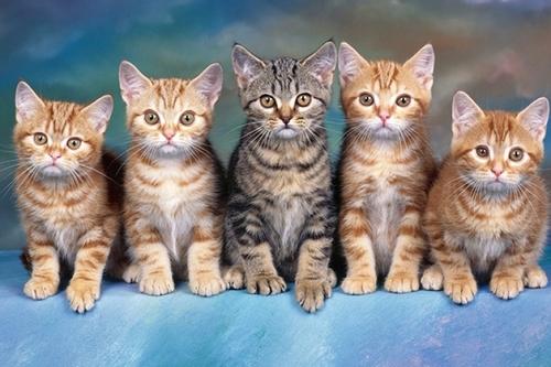 Домашние кошки способны различать свое имя в человеческой речи
