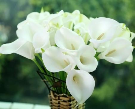 Комнатные цветы, тайно ворующие счастье