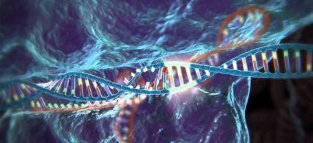 Что ДНК говорит о нашей личной жизни