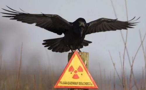 Бытовые вещи, излучающие радиацию
