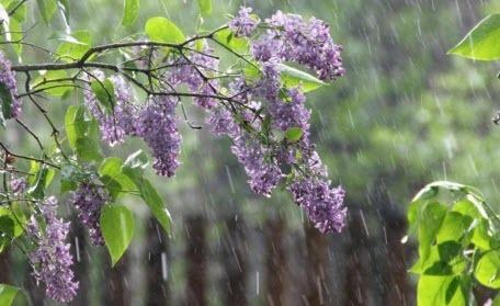 Прогноз погоди в Україні на 20 травня