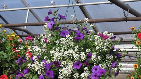 Выращивание декоративных растений в закрытом грунте