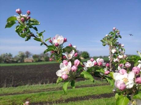 Прогноз погоди в Україні на 3 травня
