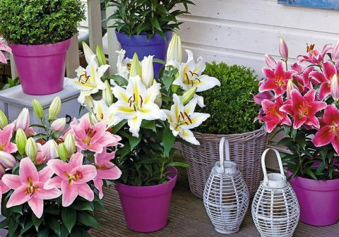 Комнатные цветы, приносящие беды и неприятности