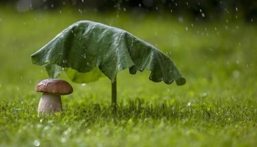 Прогноз погоди в Україні на 2 червня