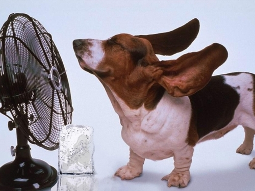 Спасаемся от жары без кондиционера
