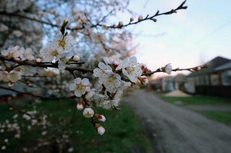 Деревья, которые стоит посадить у дома или в саду