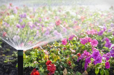 Как правильно поливать сад летом