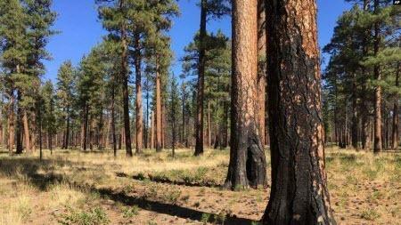 Для борьбы с глобальными потеплением ученые призвали посадить триллион деревьев