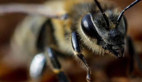 Роботы научатся видеть мир глазами насекомых