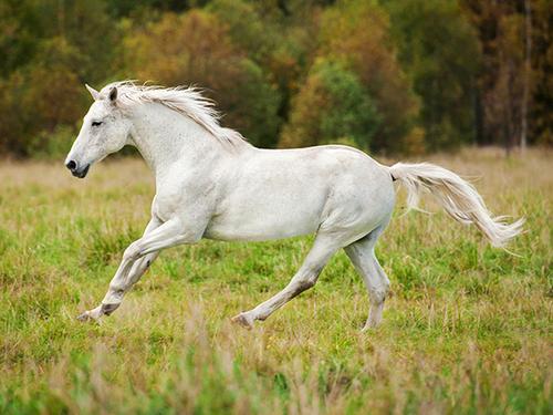 """Притча """"О лошади"""""""