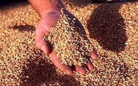 Отделяя зерна от плевел