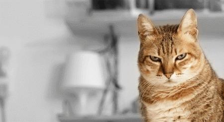 Любят ли нас кошки и собаки или же живут с нами только ради еды